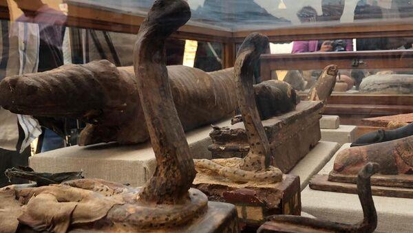 V Egyptě našli hrobky s mumifikovanými zvířaty - Sputnik Česká republika