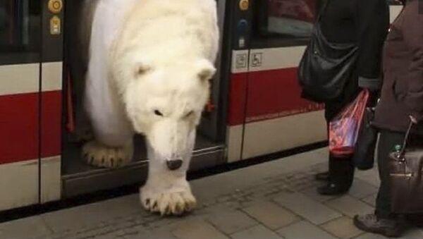 Bílý medvěd vystupující z tramvaje - Sputnik Česká republika