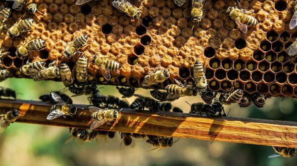 včely - Sputnik Česká republika