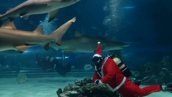 Santa Claus se žraloky - Sputnik Česká republika