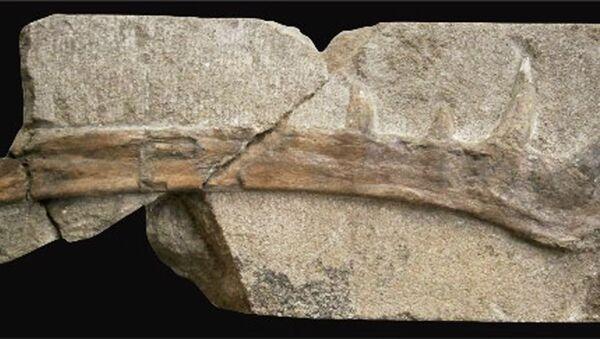 Zkamenělé pozůstatky Klobiodon rochei - Sputnik Česká republika
