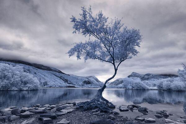 Snímek Lonely Tree od fotografa Davida Halla, který vyhrál v kategorii Infrared Landscape v soutěži infračervených fotografií Život v jiném světle - Sputnik Česká republika