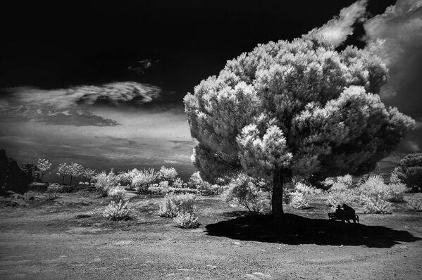 Snímek In the Shadow od fotografky Tatiany Alejnikové, zvýrazněný v kategorii IR Black & White v soutěži infračervených fotografií Život v jiném světle - Sputnik Česká republika