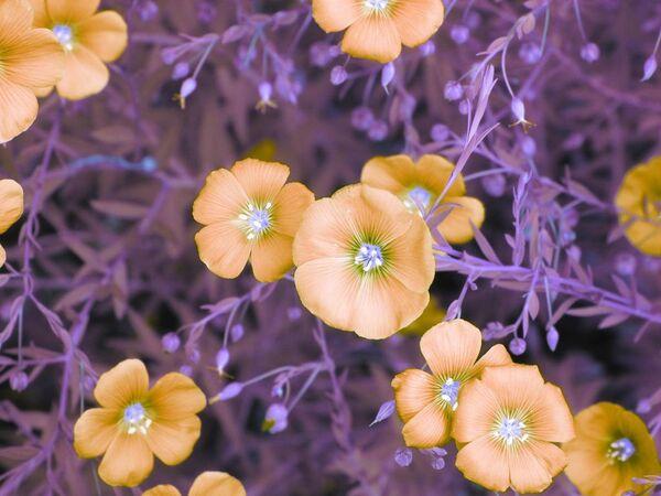 Snímek Flowers od fotografky Kate Adlerové, zvýrazněný v kategorii Infrared Color v soutěži infračervených fotografií Život v jiném světle - Sputnik Česká republika