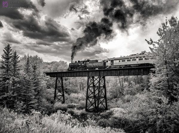 Snímek On the Way Home od fotografa Kena Sluta, zvýrazněný v kategorii IR Black & White v soutěži infračervených fotografií Život v jiném světle - Sputnik Česká republika