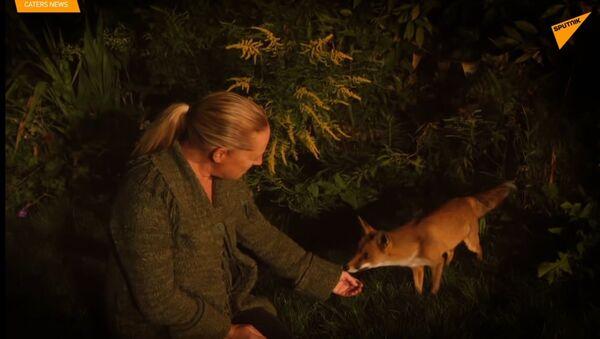 Žena a liška: příběh velkého přátelství - Sputnik Česká republika