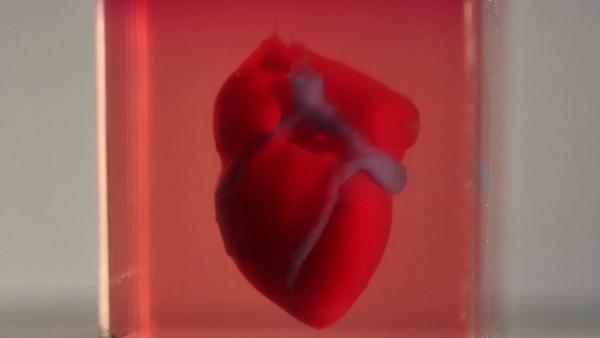 Vědci poprvé odhalili 3D otisk lidského srdce (VIDEO) - Sputnik Česká republika