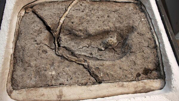 Nejstarší lidská stopa, kterou vědci nalezli v Chile - Sputnik Česká republika