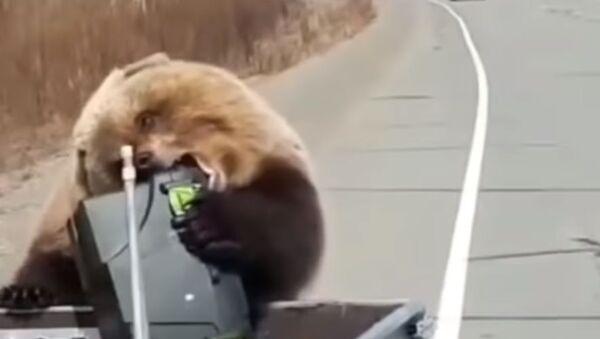 Drzý medvěd na Kamčatce ukradl lovcům lednici - Sputnik Česká republika